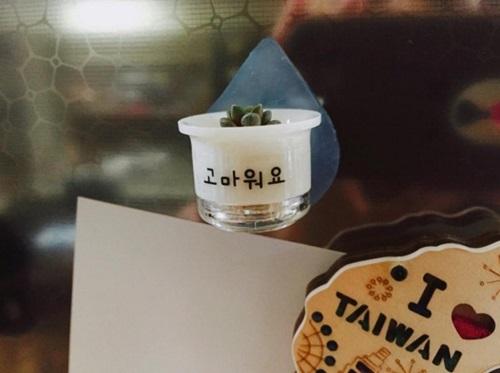 「今天也辛苦了!」 韩国迷你多肉盆栽风行办公室