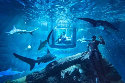 应该不会睡到一半被鲨鱼吃掉吧?法国水族馆邀你免费入住海底世界