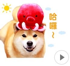 丸太郎也出动态贴图啰!「柴犬MARU」就要萌翻你的手机