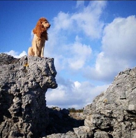 有见过披着狮子皮的狗吗?「大城市里的狮子」摄影辑