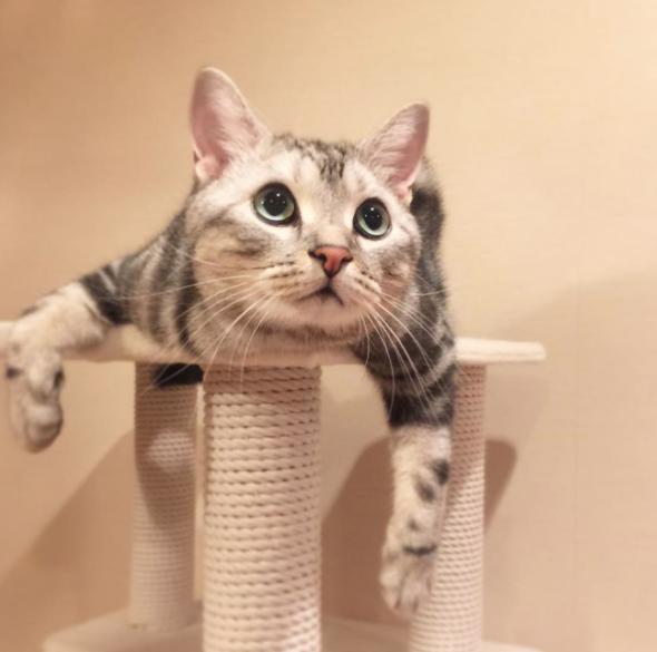 根本就是蛋黃哥分身嘛!超療癒懶懶貓陪你懶出新高度