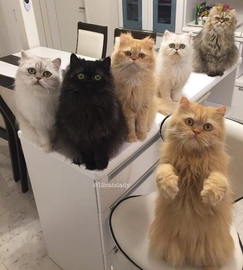 你的沙发和床都不是你的!和12只猫当室友的真相大公开