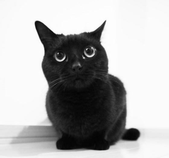 推广黑猫中!表情超多的黑喵P-chan与牠的好伙伴们