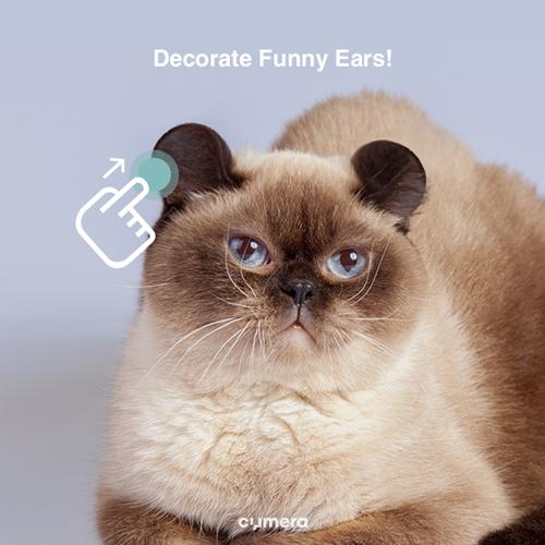 发现新品种「圆耳猫」?!揭开可爱无极限喵喵的诞生秘密