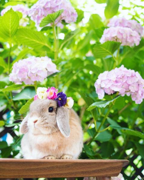 生得美又超会打扮!兔兔公主的帽子派对超梦幻