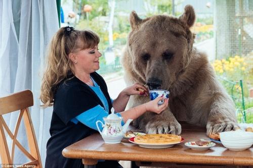 熊麻吉是你?备受人类父母宠爱的温柔熊抱哥Stepan