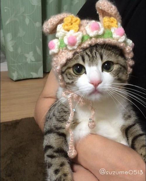 网路爆红的可爱刷牙猫就是牠!有着粉红鼻的Suzume君