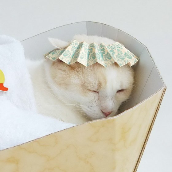奴们,该上工啰!猫主子的新玩具「DIY猫浴缸」舒服登场