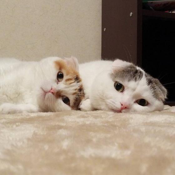 《Tsum Tsum》新角色登场?!扁得不可思议的扁头猫兄妹档