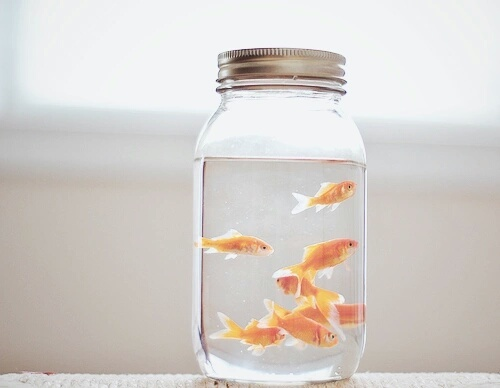 不要再说鱼只有三秒的记忆了!?我们对动物还相信的6个迷思