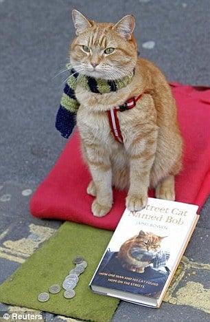 遇见你我才找到存在的意义!真人真猫的暖心电影《A Streetcat Named Bob》