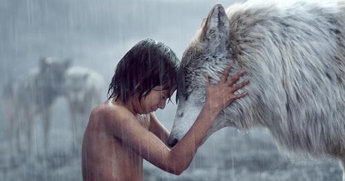 欸狼真的有这么惹人爱吗?盘点4部和狼相关的爱情戏剧