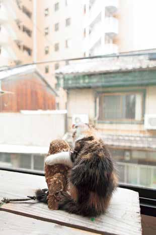 「喵鹰好朋友」勾肩搭背超温馨!跨种族友谊之暖心摄影集