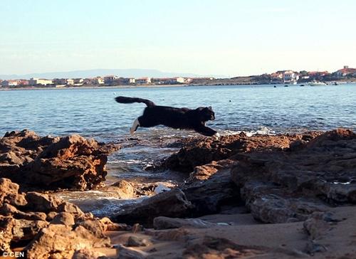「猫海岸」听起来也太可爱了吧!完全可以说是猫王国的义大利小镇Su Pallosu