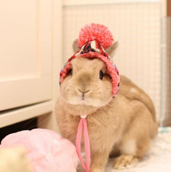 「帽帽就是我最爱的单品!」毛帽控人气兔兔的冬季暖日常