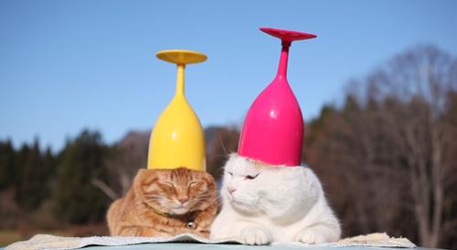 猫奴必败~猫咪可以喝的红酒!以后下班可以和爱猫小酌一杯了