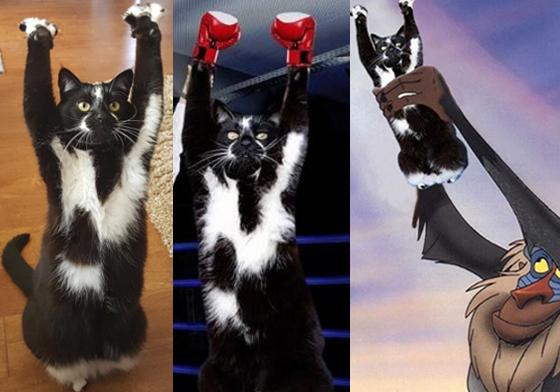 女人不是月亮全集1_媽咪我的貓中邪了!?惡搞無極限的舉手貓P圖全集來啦   貓咪 ...