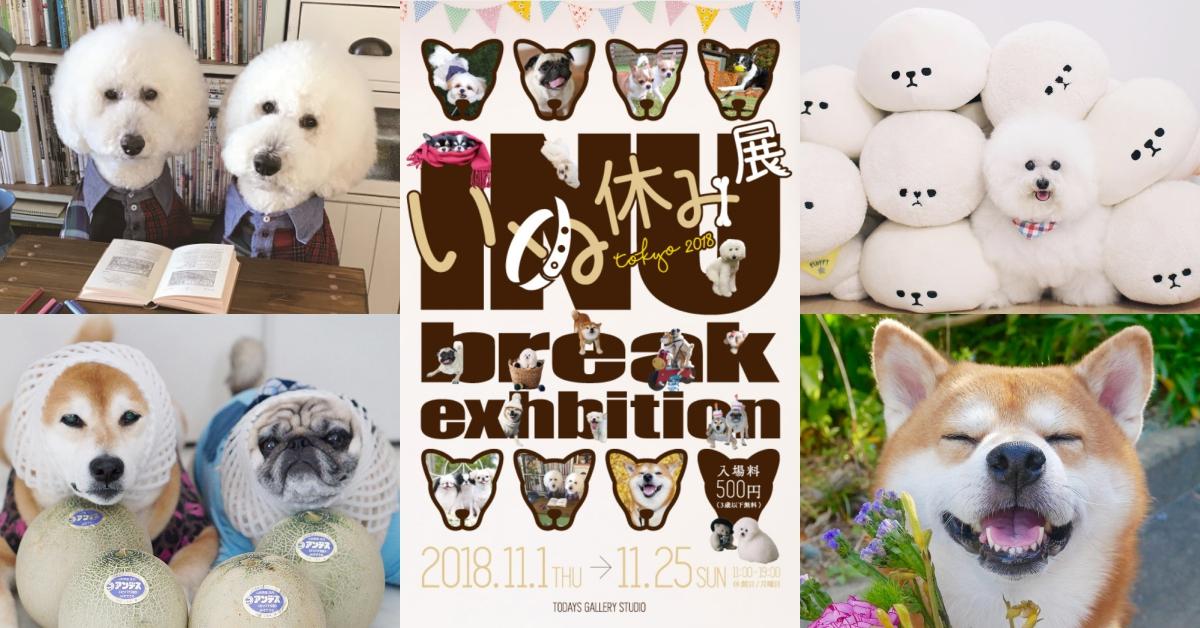 连狗狗都比你红~加总超过百万粉丝的网红狗办展览!日本卡哇伊狗狗展开催