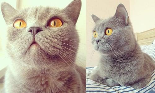 「人家只是有点骄傲但不是公主病!」傲娇公主迪塔猫的小时光週记