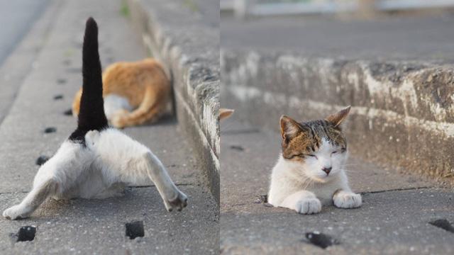 开始玩打地喵的意思吗?摄影师捕捉爱钻下水道的猫咪写真集