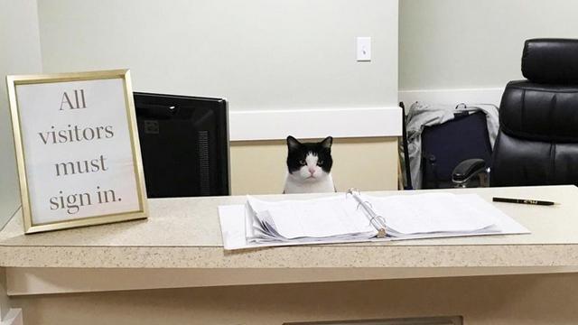 疗养院的猫柜台 疗癒喵星人入驻爷爷奶奶的心